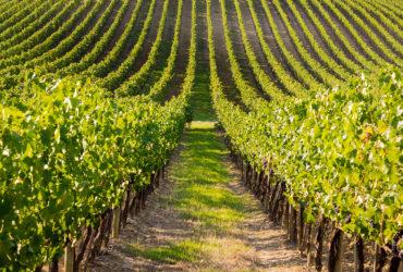 Tuscan Terrace at Sirromet Winery